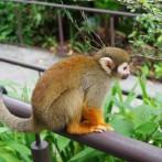 What Makes River Safari Wildlife Park So Unique
